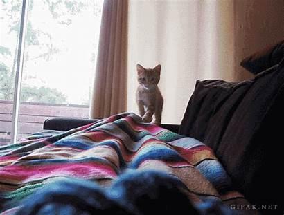 Kitten Pounce Cyber Monday Tips Pouncing Rack