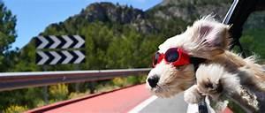 Urlaub Mit Hund Sterreich Steiermark