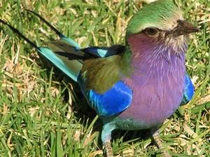 Animal Qui Commence Par U : oiseaux qui commence par b oiseaux qui commence par b les oiseaux qui nous enchantent ~ Medecine-chirurgie-esthetiques.com Avis de Voitures