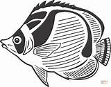 Angelfish Clipart Coloring Pages Fish Butterfly Cliparts sketch template