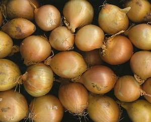 Jus Avec Extracteur : faire du jus de oignons avec un extracteur de jus ~ Melissatoandfro.com Idées de Décoration