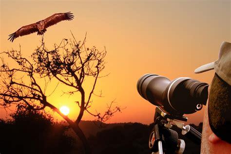 Best Places To Watch Birds Around The World Worldation