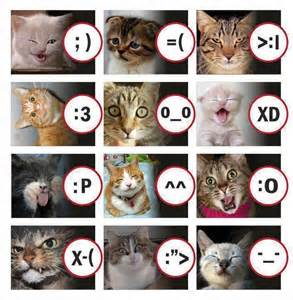 cat emotions cat emotions bark time