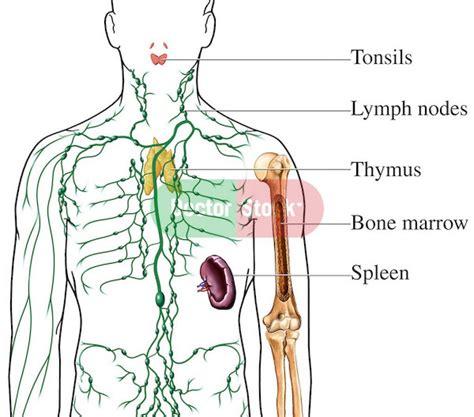 lymphatic system lymph nodes diagrams nursing