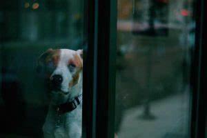 Laisser Un Chien Seul Quand On Travaille : laisser un chien seul quand on travaille nos conseils toutoupourlechien ~ Medecine-chirurgie-esthetiques.com Avis de Voitures