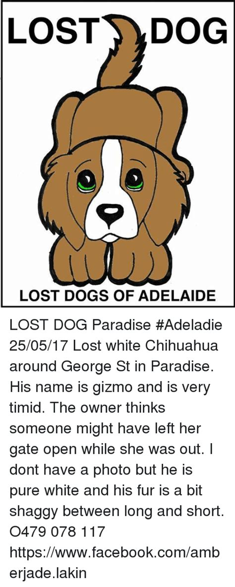 Lost Dog Meme - lost dog lost dogs of adelaide lost dog paradise adeladie 250517 lost white chihuahua around
