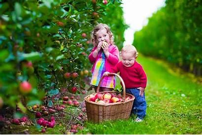 Apple Picking Farm Apples Children Basket Boys