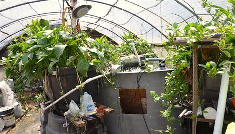 kerala farmers embrace aquaponics  combat climate change
