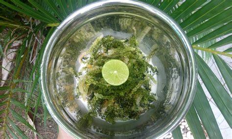 cuisine tahitienne recettes recette remu vine green caviar au lait de coco et citron