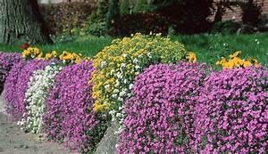 Welche Blumen Für Bienen : welche blumen sind f r steing rten garten ~ Eleganceandgraceweddings.com Haus und Dekorationen