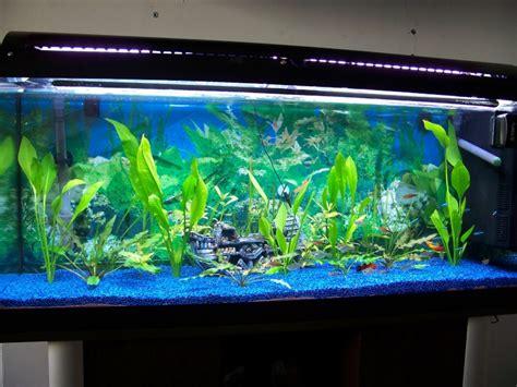 re neon aquarium ziloo fr