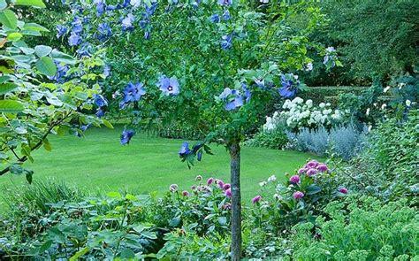 dont downsize  trees upsize  shrub telegraph