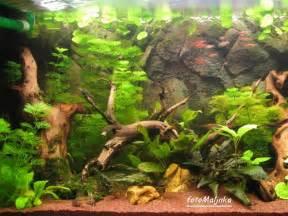 L acquario tropicale il fondo di sabbia indiana fine e lo sfondo esterno tipo poster
