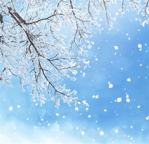 Free Winter Background by Winter Background With Branches Gallery Yopriceville