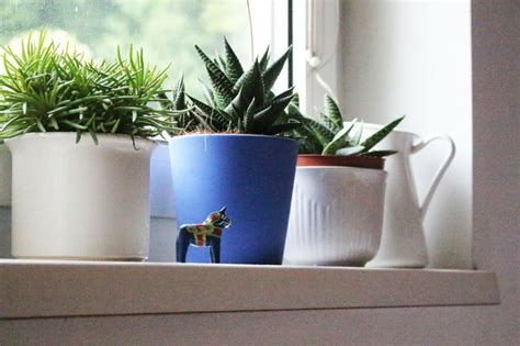 Best Windowsill Plants by 352 Best Windowsill Plants Images On