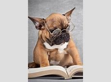 Funny picture, dog reading a book iPhone X 8,7,6,5,4,3GS