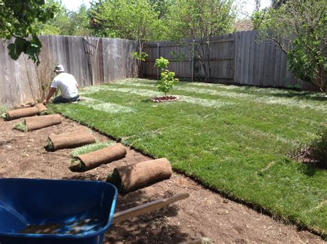 putting in a new lawn sodding or seed which is best for my yard