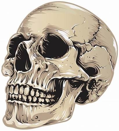 Skull Halloween Clipart Transparent Yopriceville