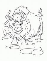 Yak Coloring Ox Sheet Kolorowanki Ludinet Jak Vbs Kolorowanka Sheets Animaux Clipart Noel Druku Comments Growling Clip Animal Drukuj Everest sketch template