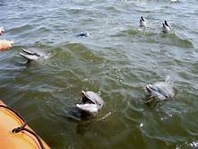 NOAA: 279 dolphins dead on U.S. Gulf Coast, triple usual number…