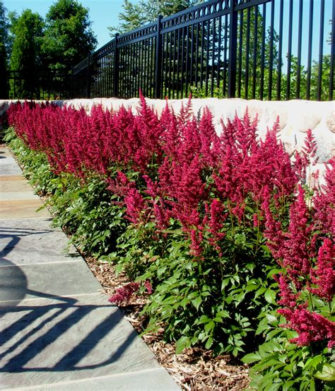 low maintenance shrubs tips for a low maintenance landscape reflections from wandsnider landscape architects
