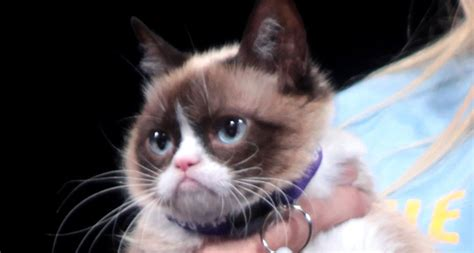 The Guilty Pleasure Of Funny Cat Videos  Science News