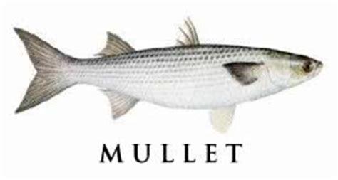 species  saltwater fish       waters