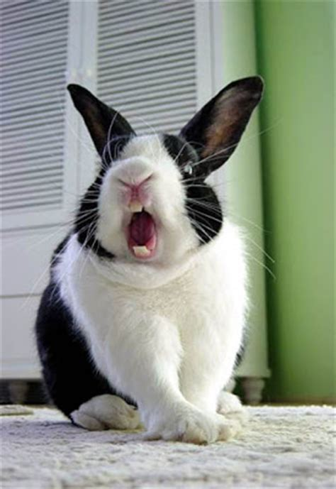 funny rabbits   fresh  images funny