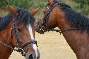 pferderecht carlos claussen partner mbb rechtsanwaelte