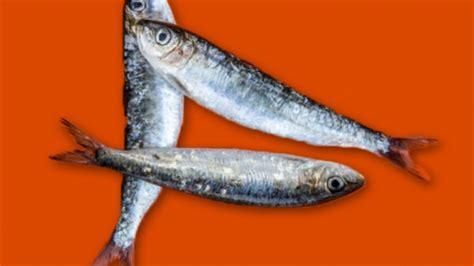 cuisiner les sardines cuisiner des sardines 5 raisons d 39 aimer les sardines today