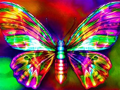 Butterfly Rainbow Neon Colorful Cool Animated Colors