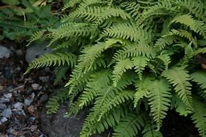 Fern Decorative Plant #4247446, 1944x1296 All For Desktop