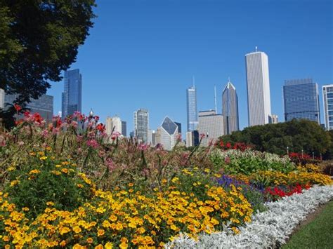 chicago s flowers photos unlimited