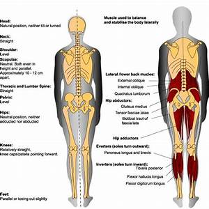 Make A Weight Loss Chart Kyphosis Lordosis Google Search Lower Leg Muscles