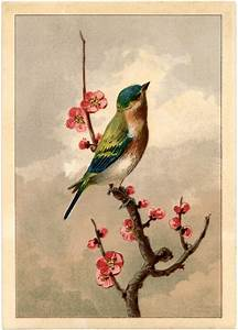 Free Bird Picture with Blossoms - The Graphics Fairy  Bird