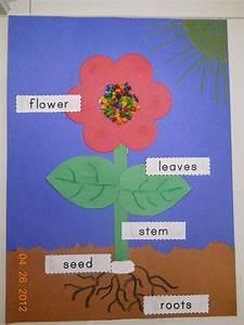 Mrs  Whaley U0026 39 S Kindergarten  Plants