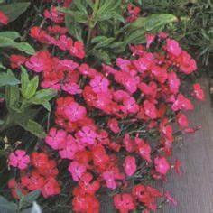 les meilleures association de plantes vivaces allium With amenagement jardin petite surface 1 collection de graminees jardin de collection jardineries