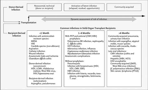 Common Infections in Kidney Transplant Recipients ...