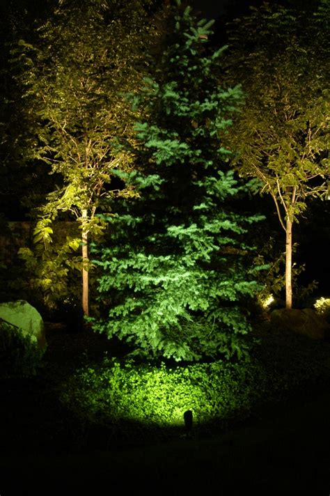 professional landscape tree lighting park city salt