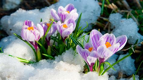 Early Spring Flowers Wallpaper