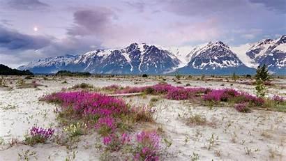 Alaska Mountains Flowers Wallpapers Purple Desktop Sand