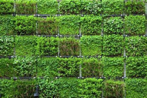 giardino verticale giardino verticale fai da te