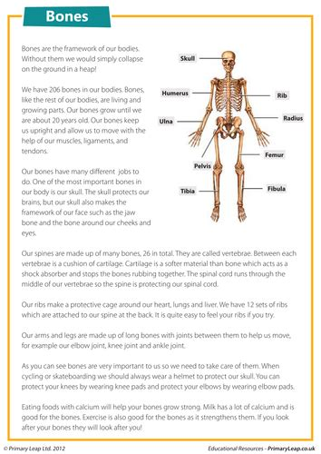 Comprehension  Bones By Loulabell86  Teaching Resources Tes