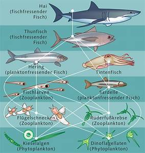 Lebensraum der Fische « World Ocean Review