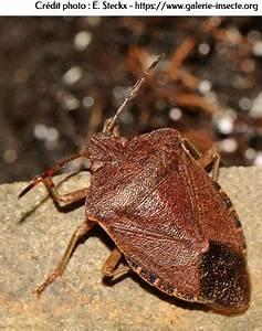 Insecticide Naturel Pour La Maison : la punaise des bois ~ Nature-et-papiers.com Idées de Décoration