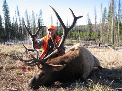 colorado outfitters hunting wilderness hunts elk pack deer backpack mount mule successful