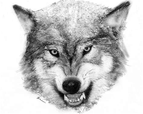 wolves  drawing  painting images