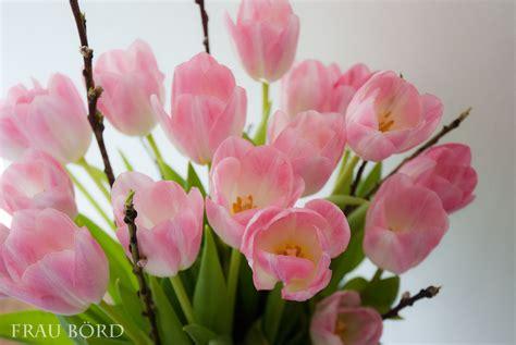 frau boerd tulpenblueten rosa