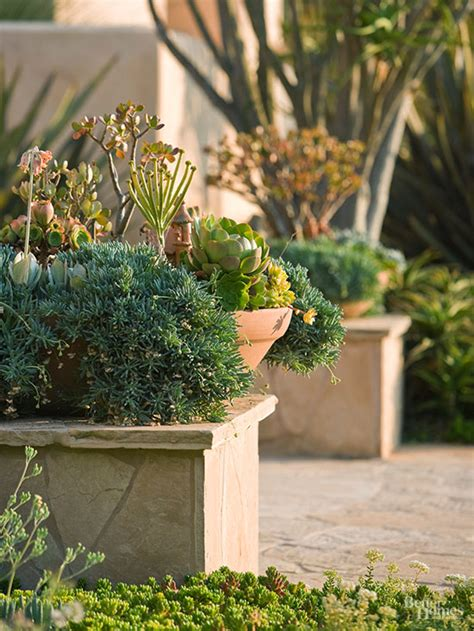 plants for facing gardens what are the best plants for a house that faces west
