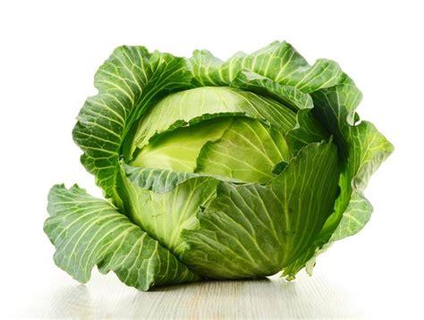 cuisiner du choux vert cuisiner du chou vert 28 images image gallery le chou